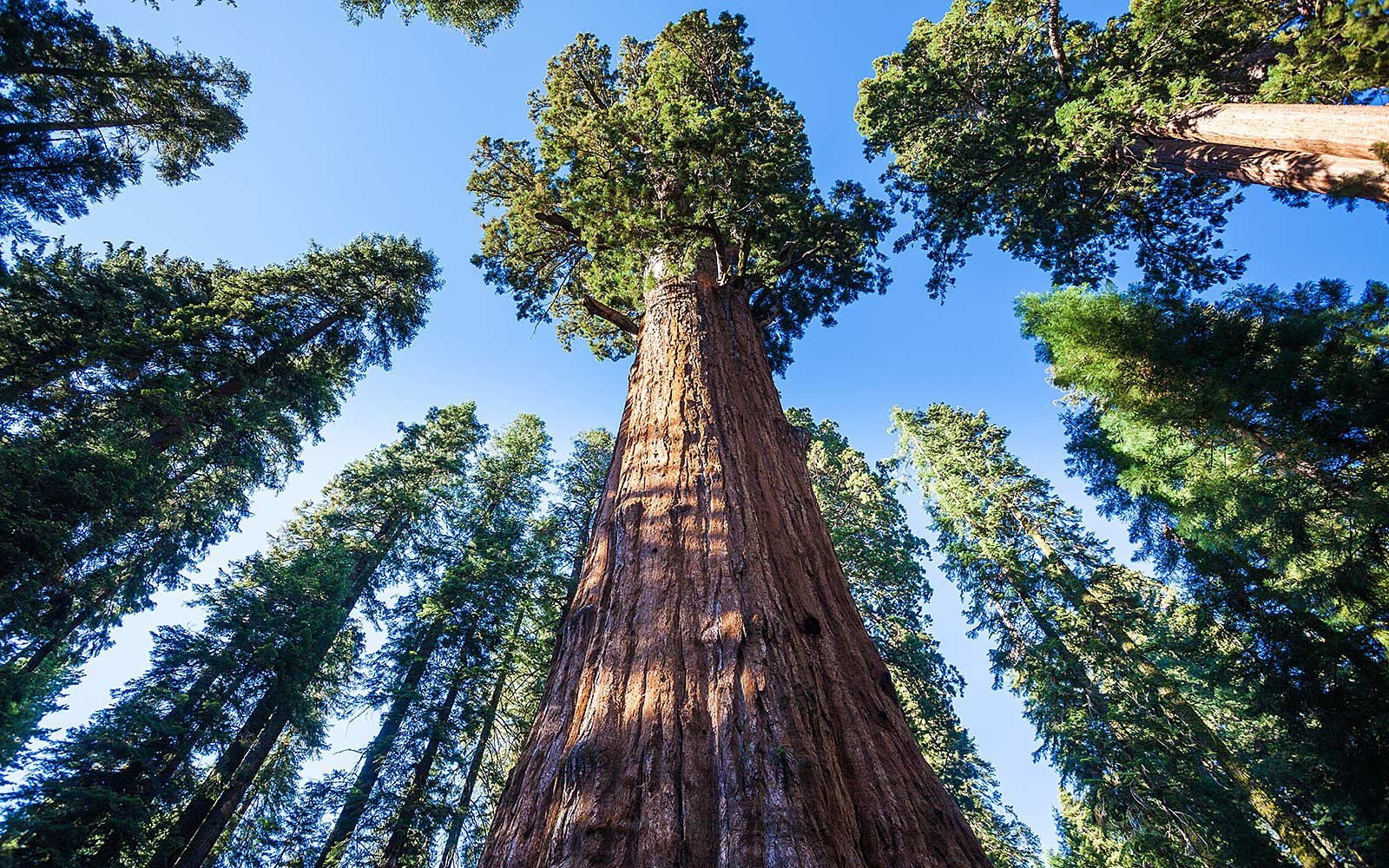 10 Incredible Trees You Can Still Visit, Now That Pioneer Cabin Is No More