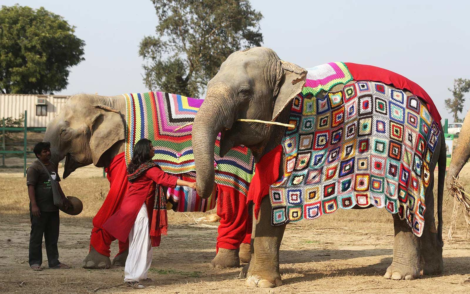Knitting Jumpers For Elephants Fake : People are knitting giant sweaters for rescue elephants