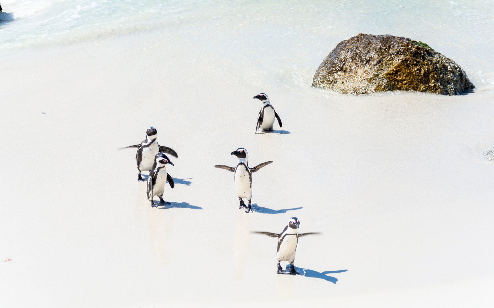 Cape-Town-South-Africa-Penguins-CUTECOLD0117