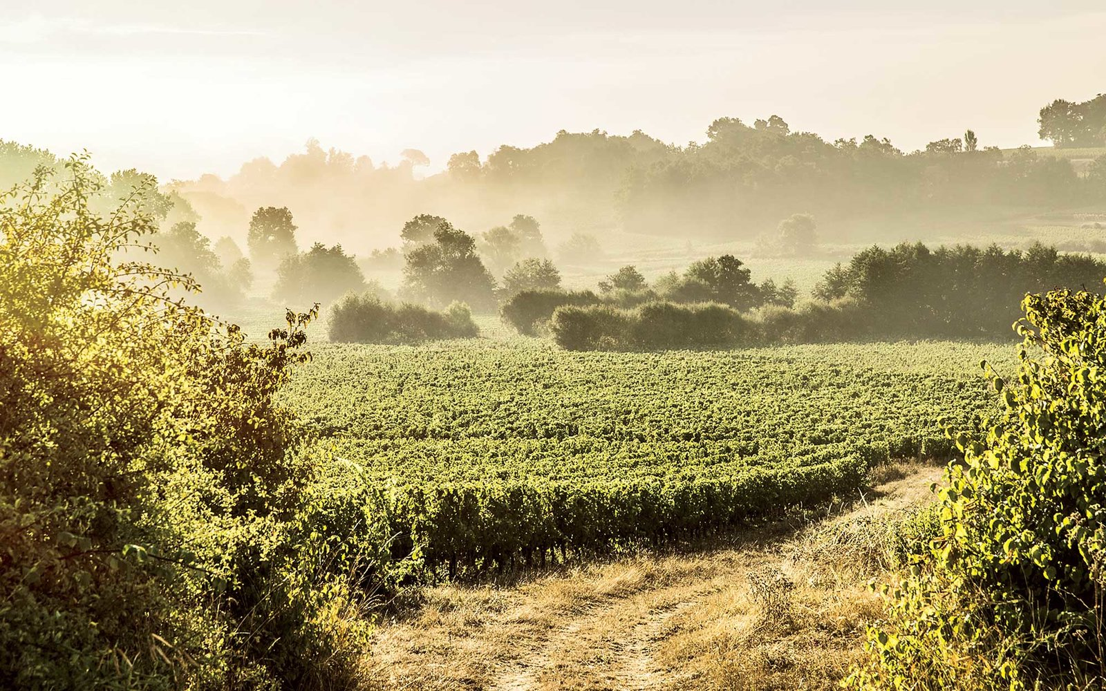 why bordeaux should be your next vineyard vacation travel leisure