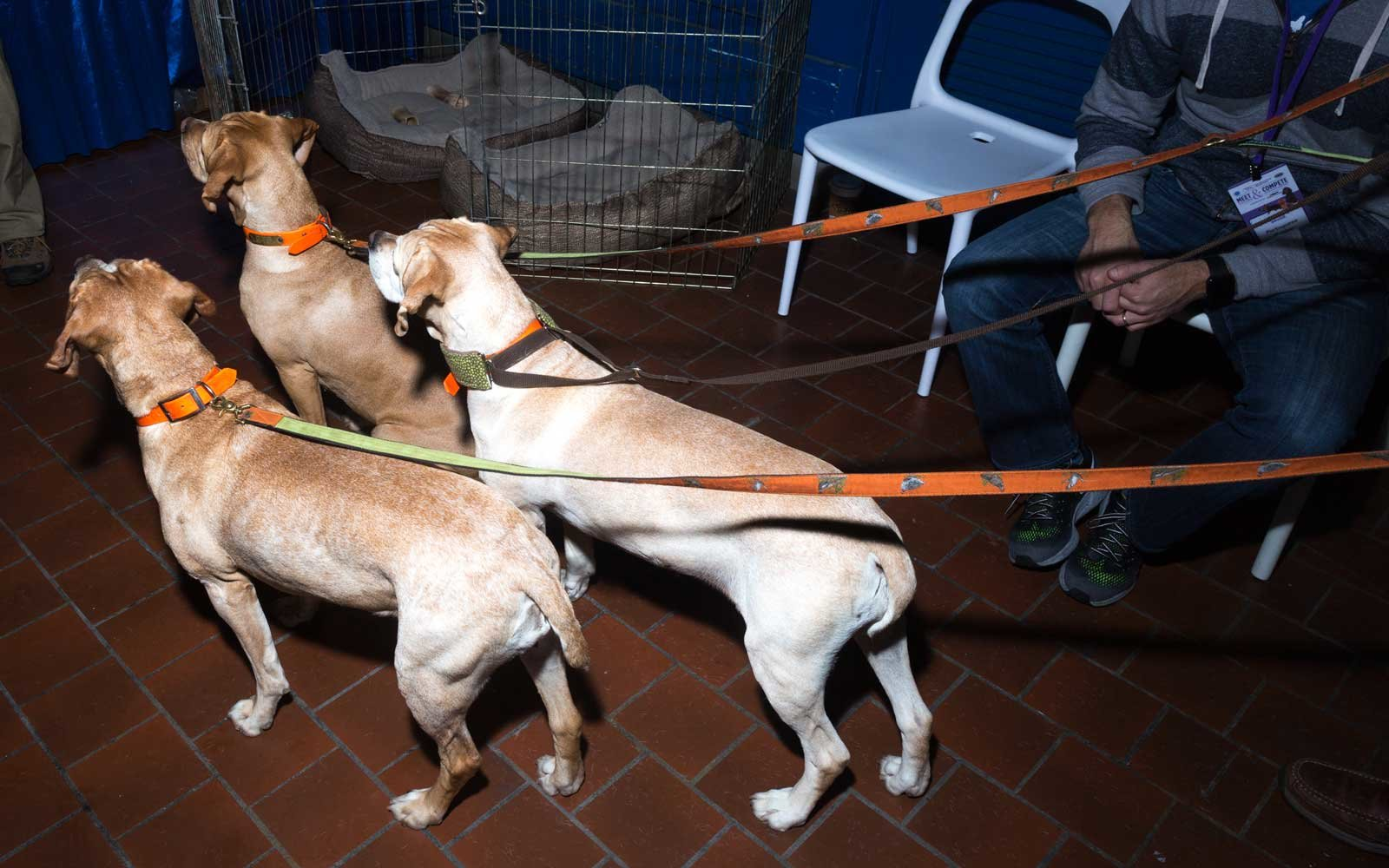 three-dogs-leash-WESTMINSTER0217