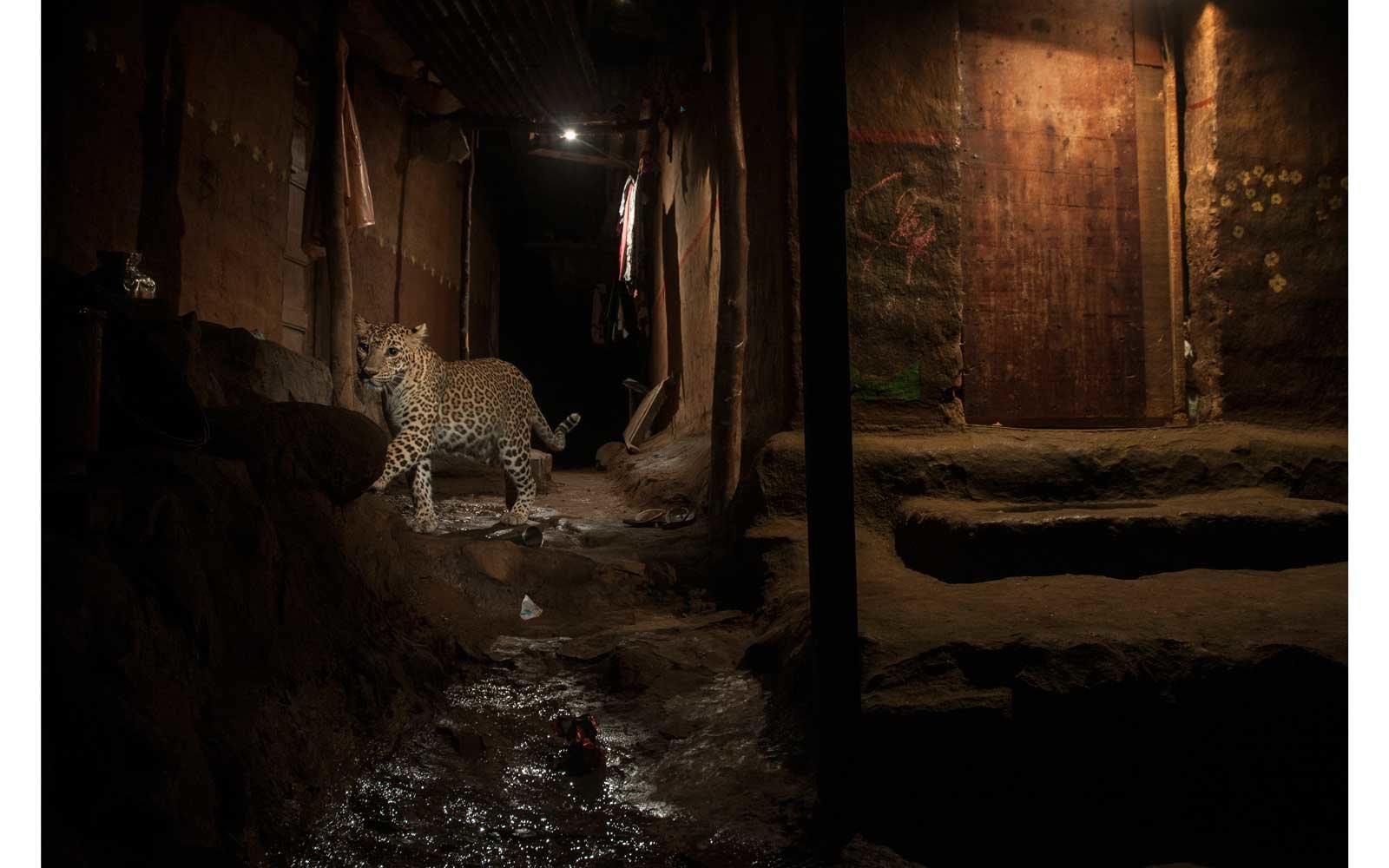World Press Photo Awards - Nature