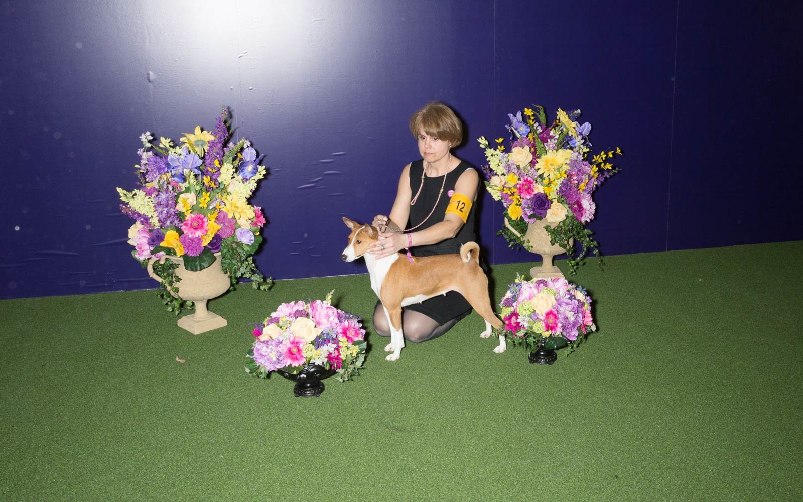 141st Westminster Kennel Club Dog Show