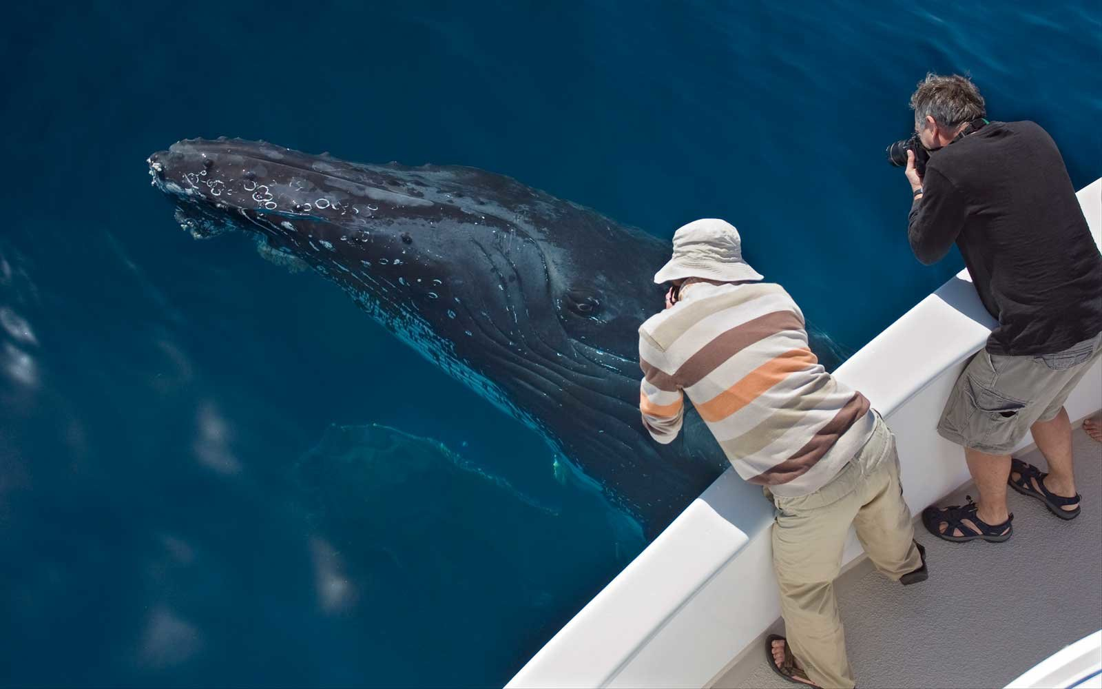Be Wowed by Whales in Cabo