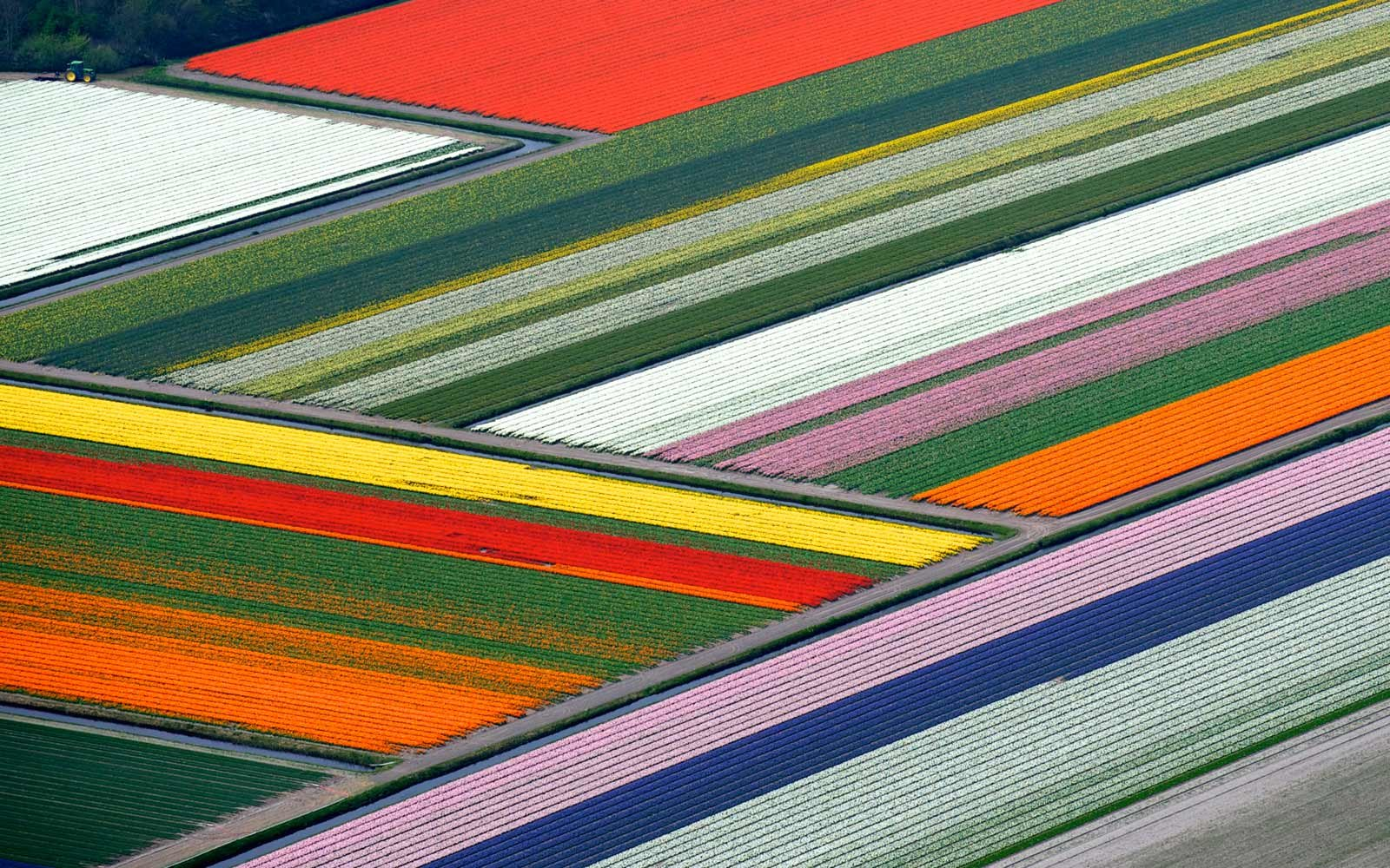 Tulip Fields in Europe