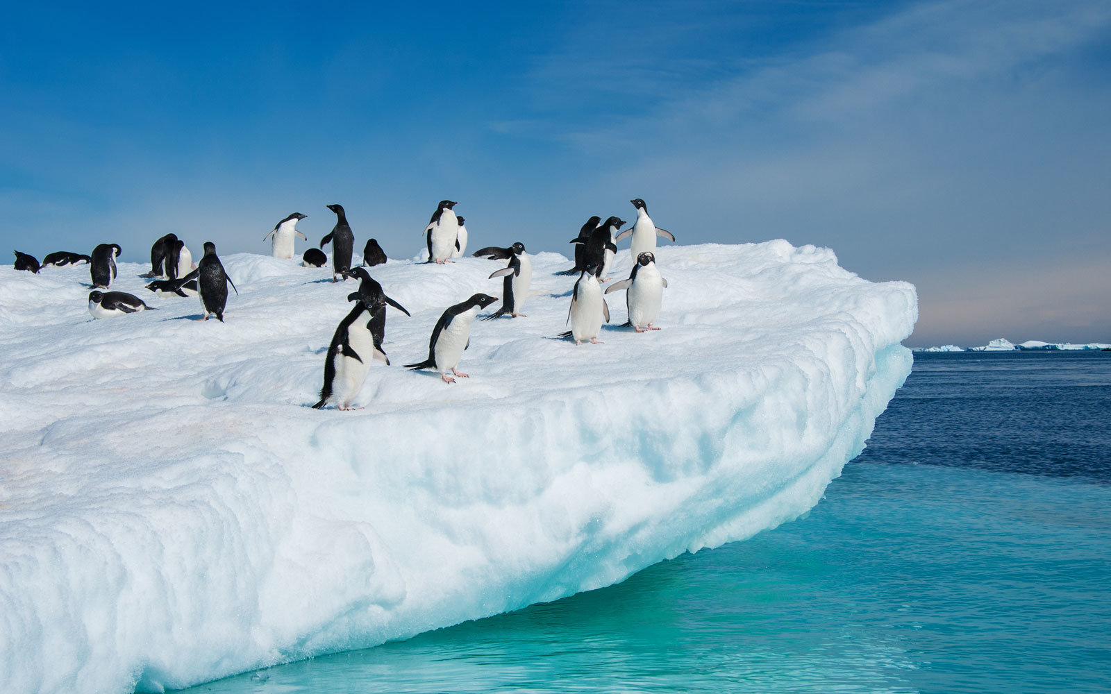 antarctica-penguins-ANTARCTIC317.jpg
