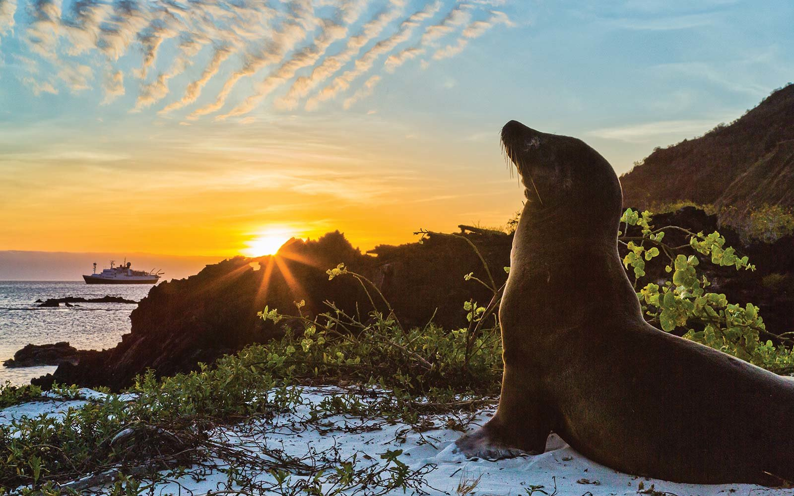 Lindblad Expeditions National Geographic Endeavour II