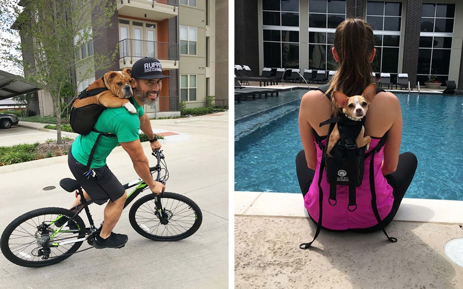 how to take your dog everywhere