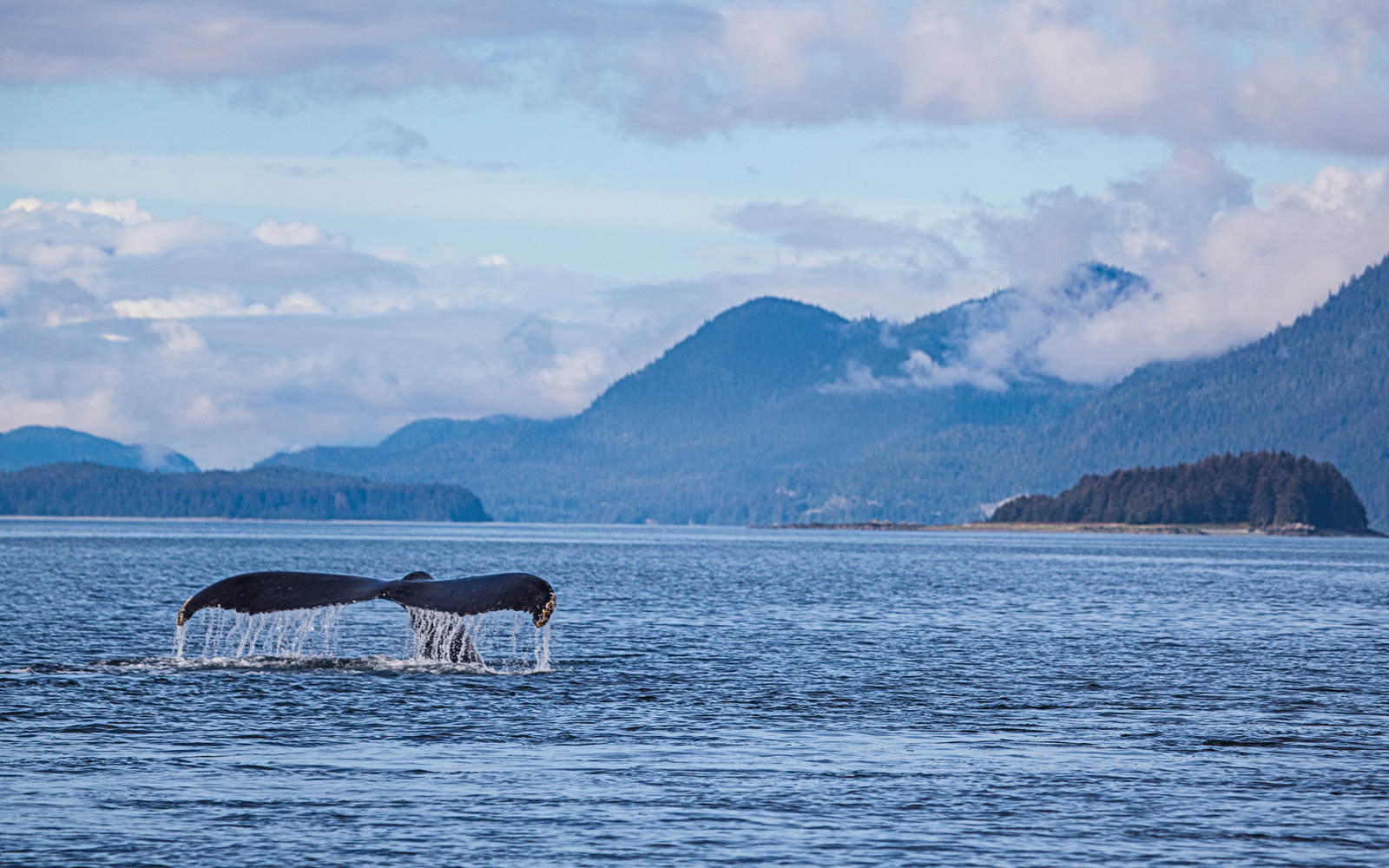 8 of the best locations for whale watching in the US