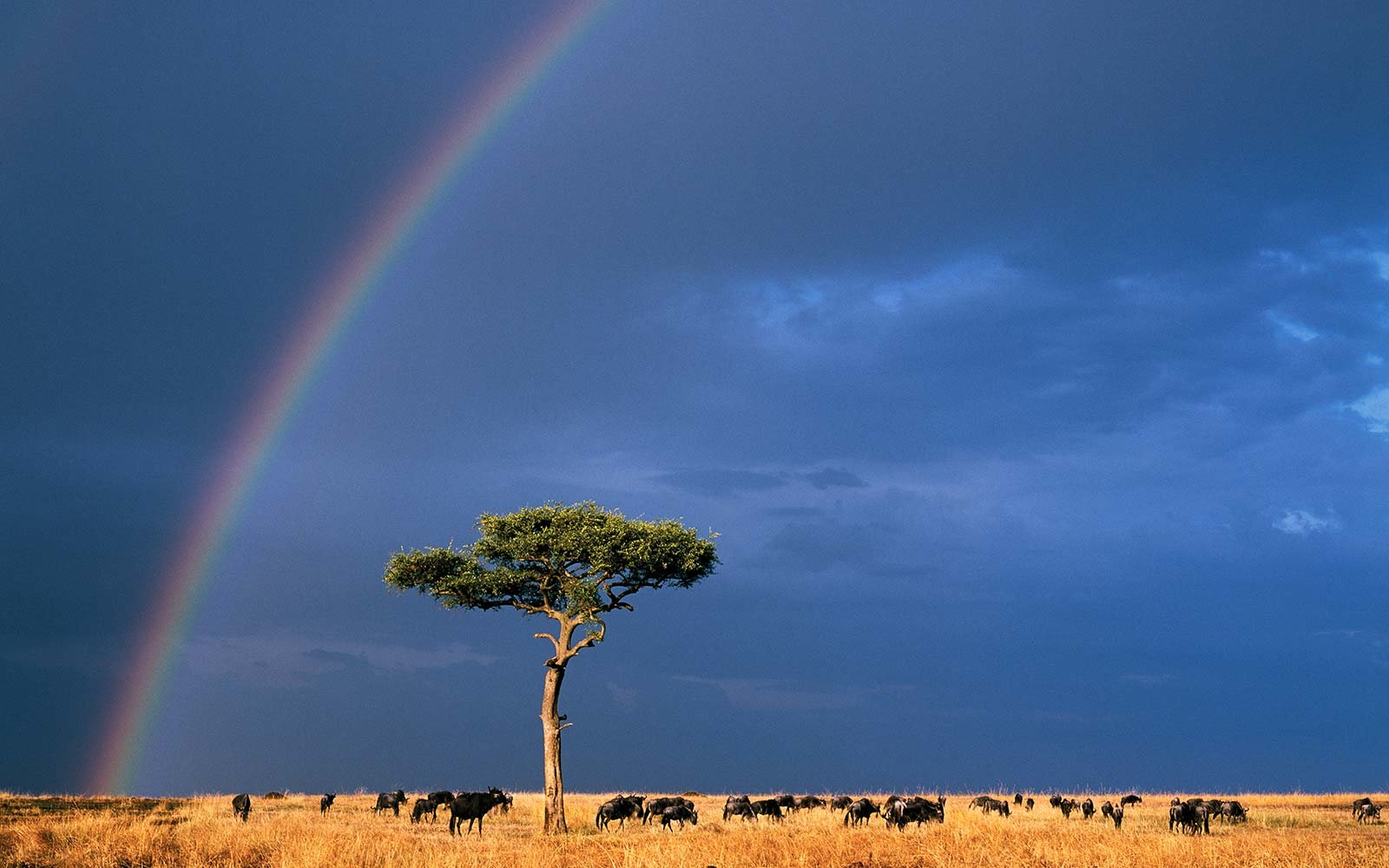 these photos prove rainbows are the best natural