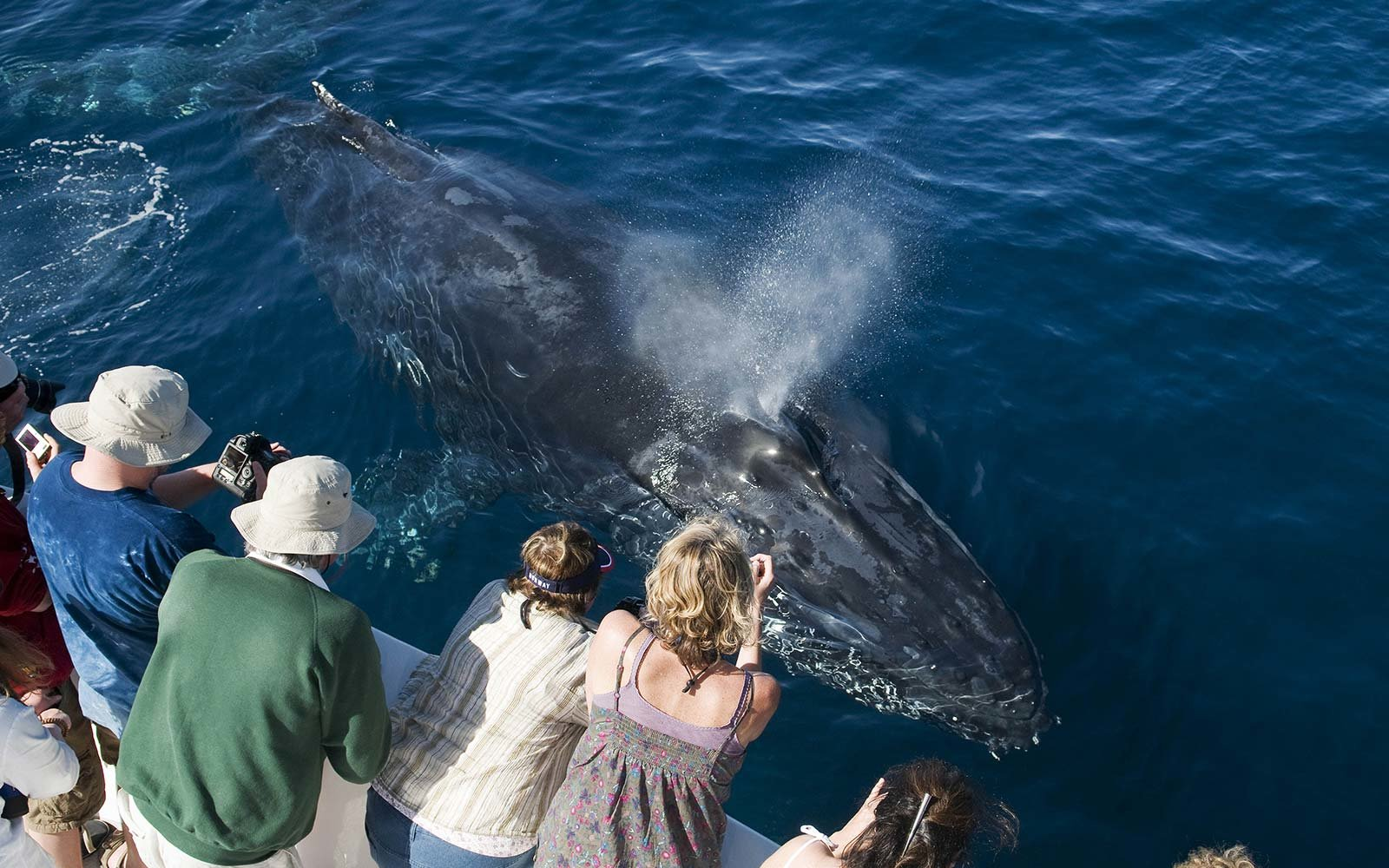Where to Watch Whales in California
