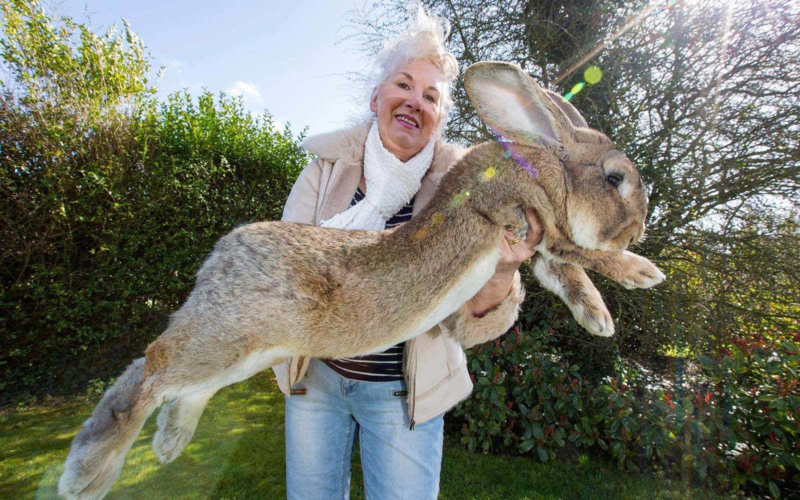 Annette Edwards United Airlines Dead Giant Bunny Rabbit