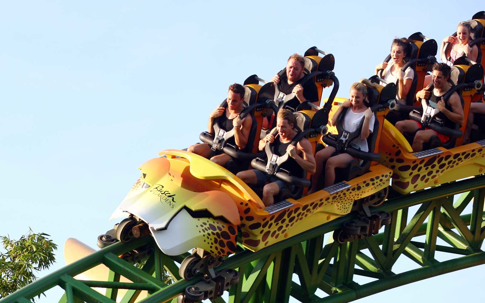 busch garden deals. Rides At Busch Gardens Tampa Garden Deals