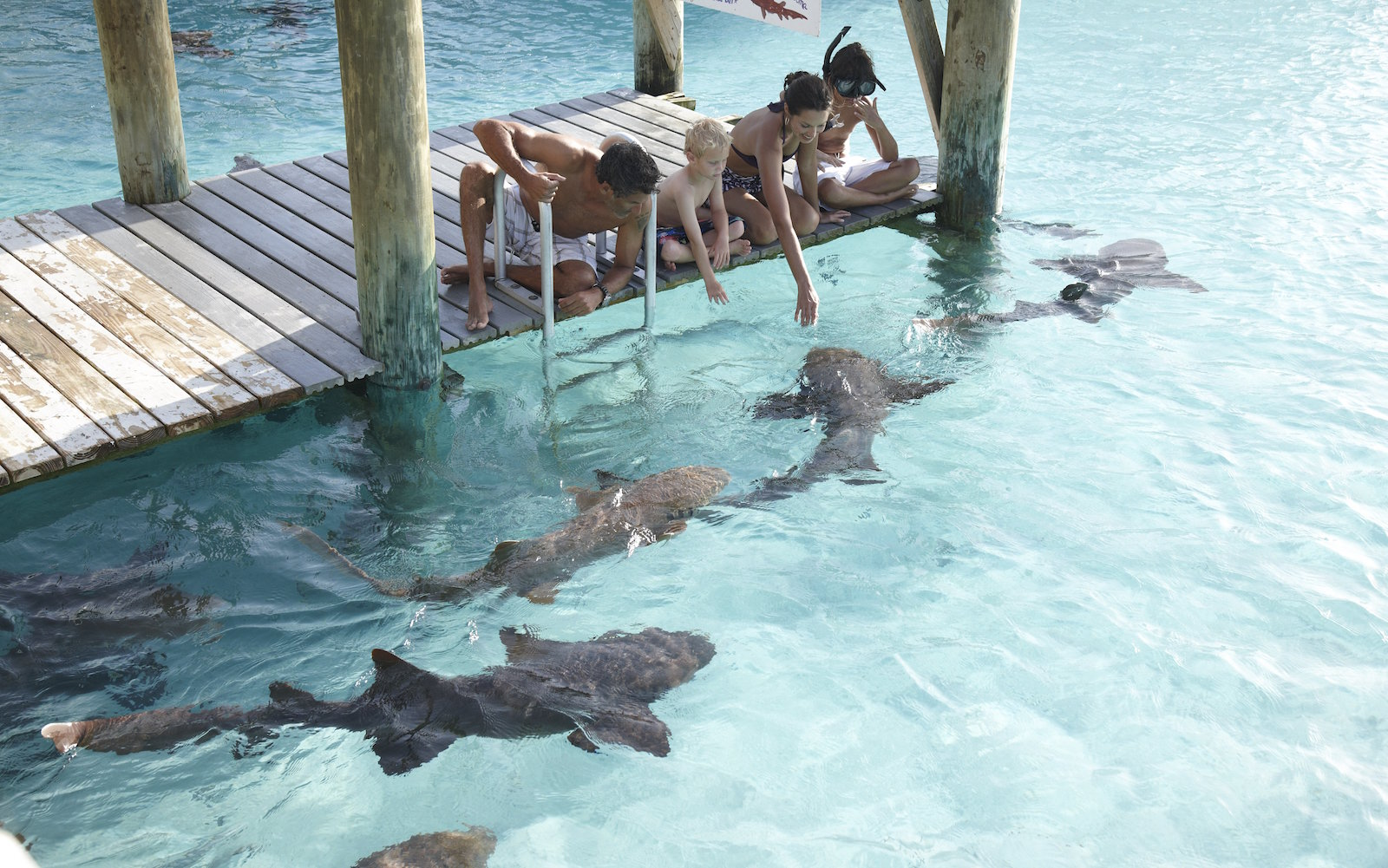 Kids pet nurse sharks at Compass Cay in Exumas, Bahamas