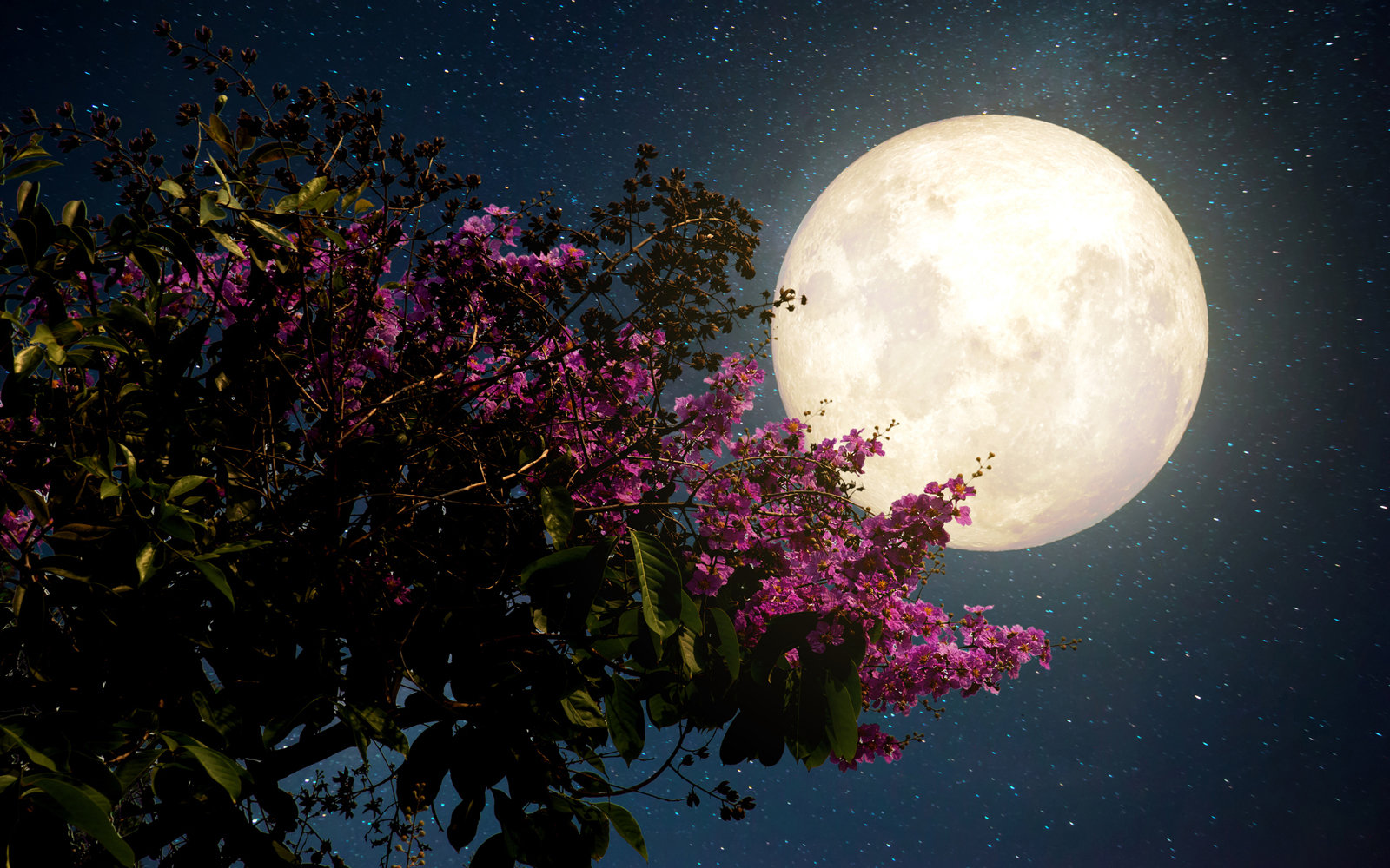 Watch the Flower Moon rise on Wednesday night