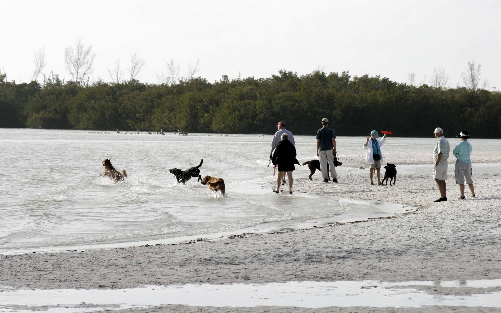 Fort Myers Beaches Dog Friendly