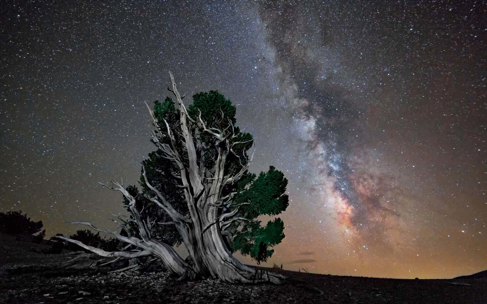 Ancient Bristlecone Forest, California