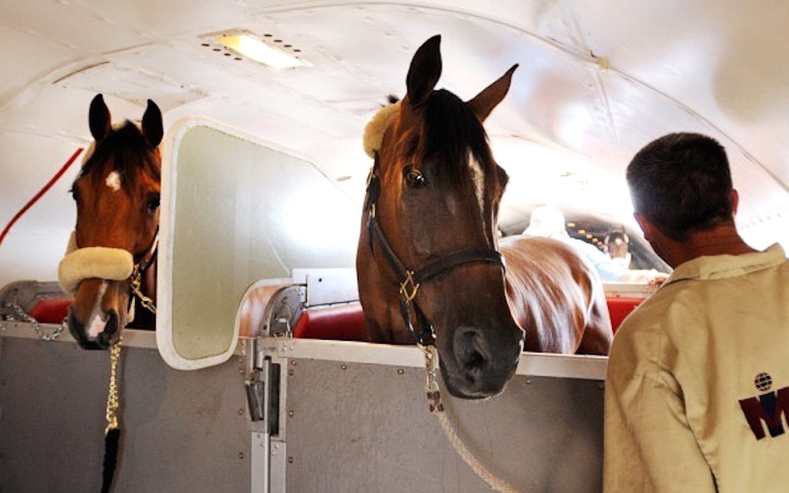 Air Transport for Horses