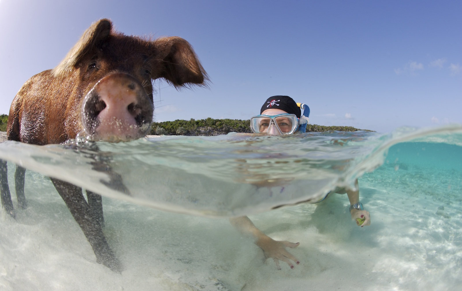 "BAHAMAS - DATE UNSPECIFIED: ***EXCLUSIVE*** Nadine Umbscheiden snorkels with a pig, in the Bahamas. Nadine, a German underwater photographer was dubbed the ""pig whisperer"" for her ability to swim with the pigs. Swimming in the crystal clear waters off the"
