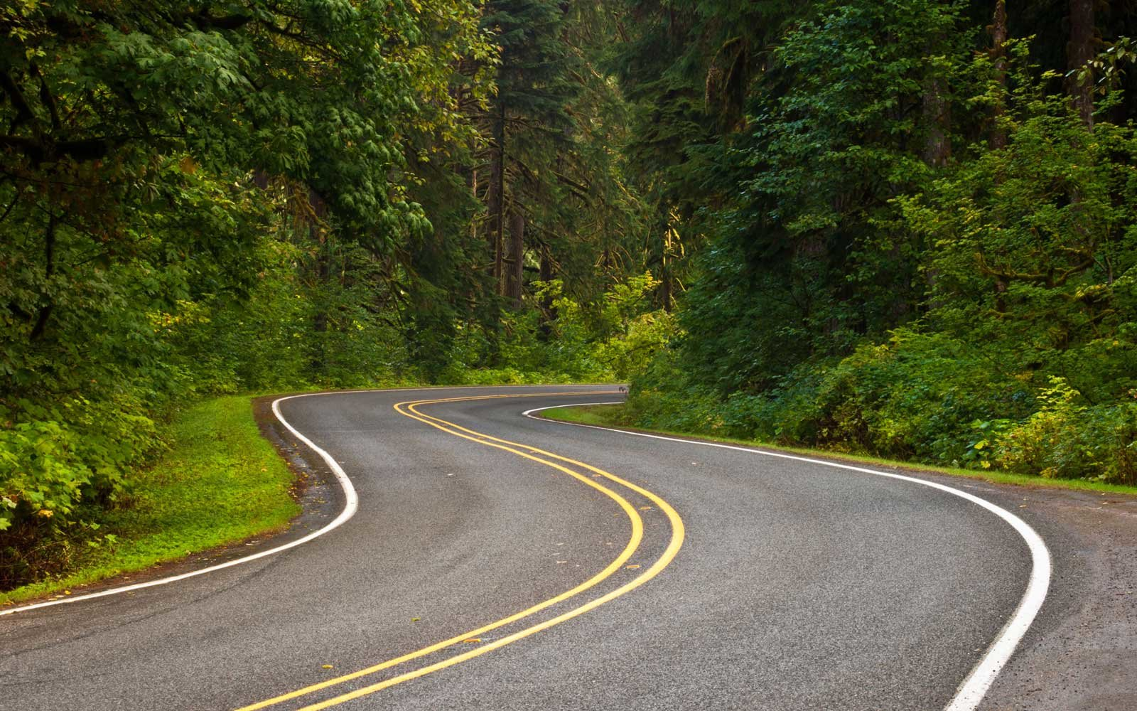 washington s mountain loop highway is a scenic road trip waiting to