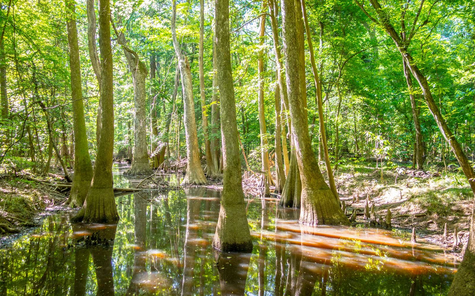 Forest, Congaree National Park, South Carolina