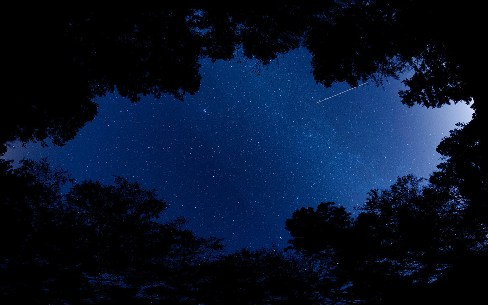 Stars from Bluff Trail, Congaree National Park, South Carolina