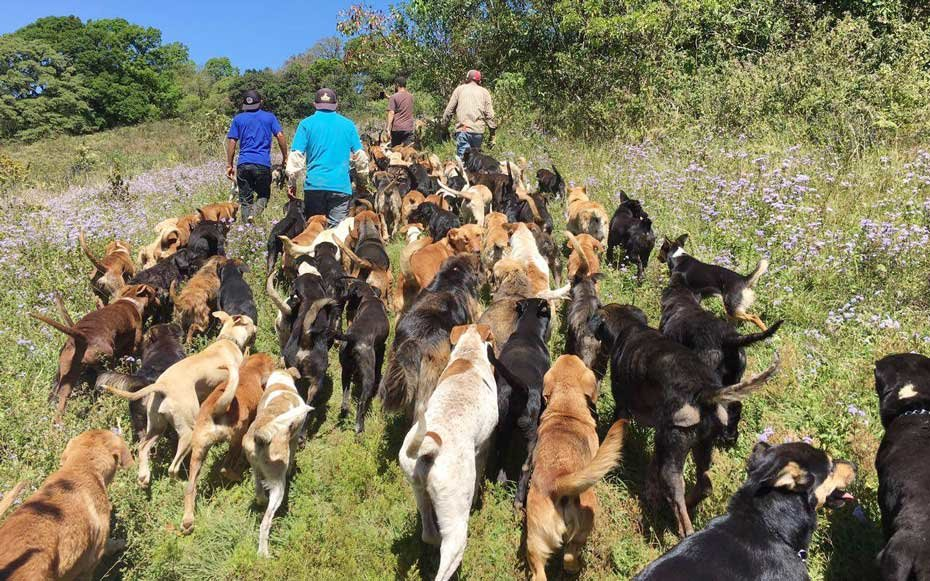 Territorio de Zaguates, The Land of the Strays