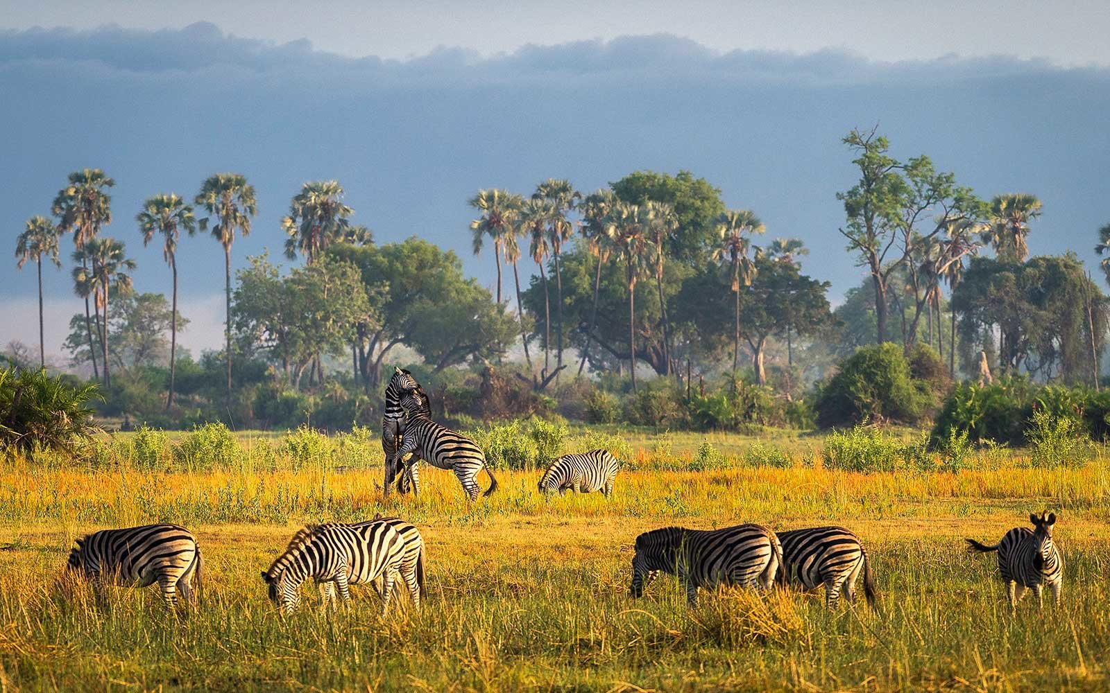 Wilderness Safaris Mombo Camp and Little Mombo Camp in Africa