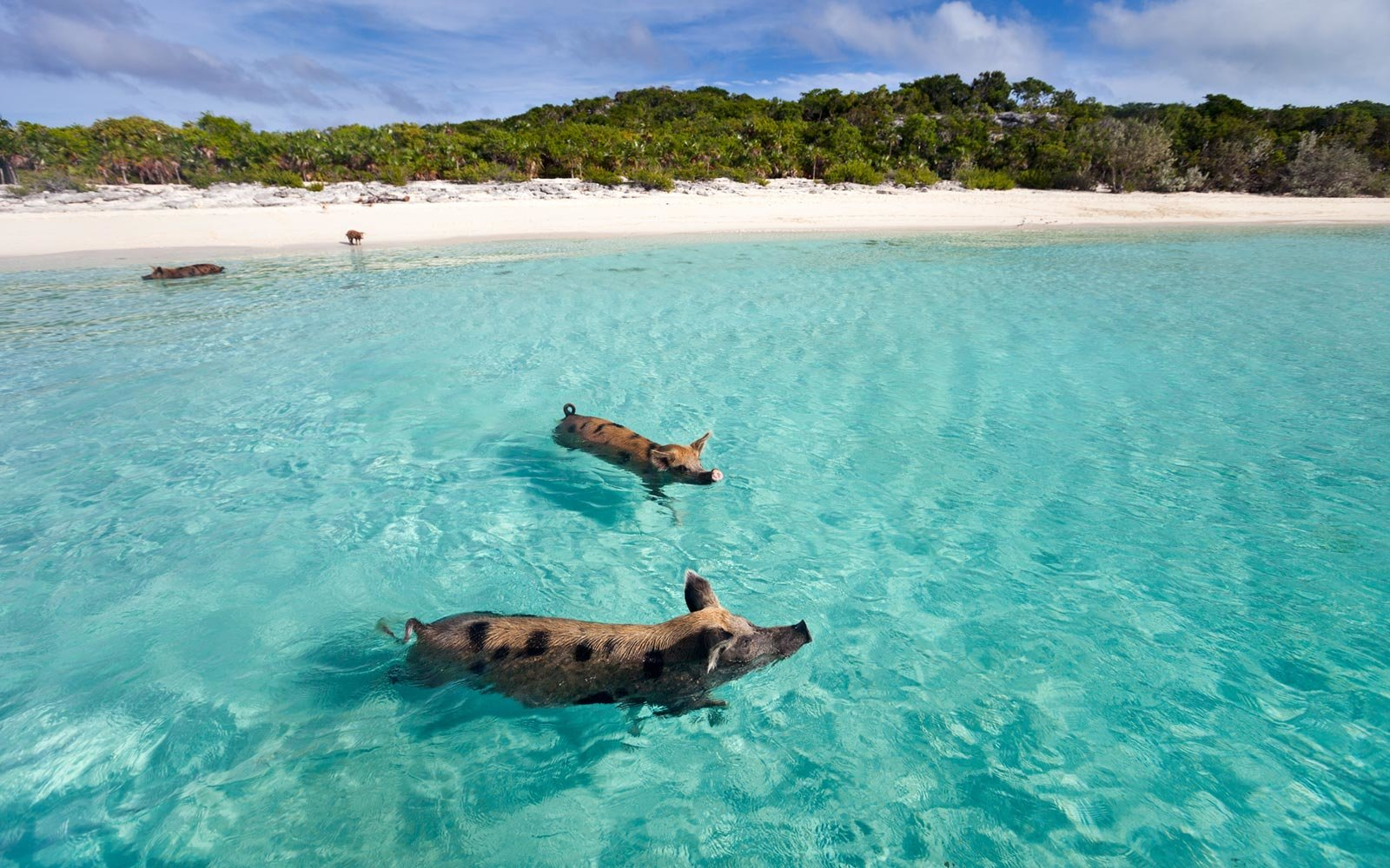 Swimming With Pigs in the Exumas, Bahamas