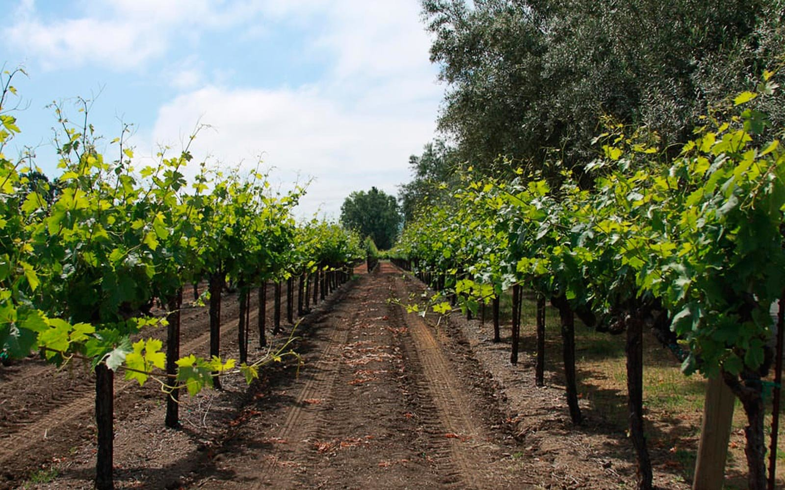 Wineries in Calistoga