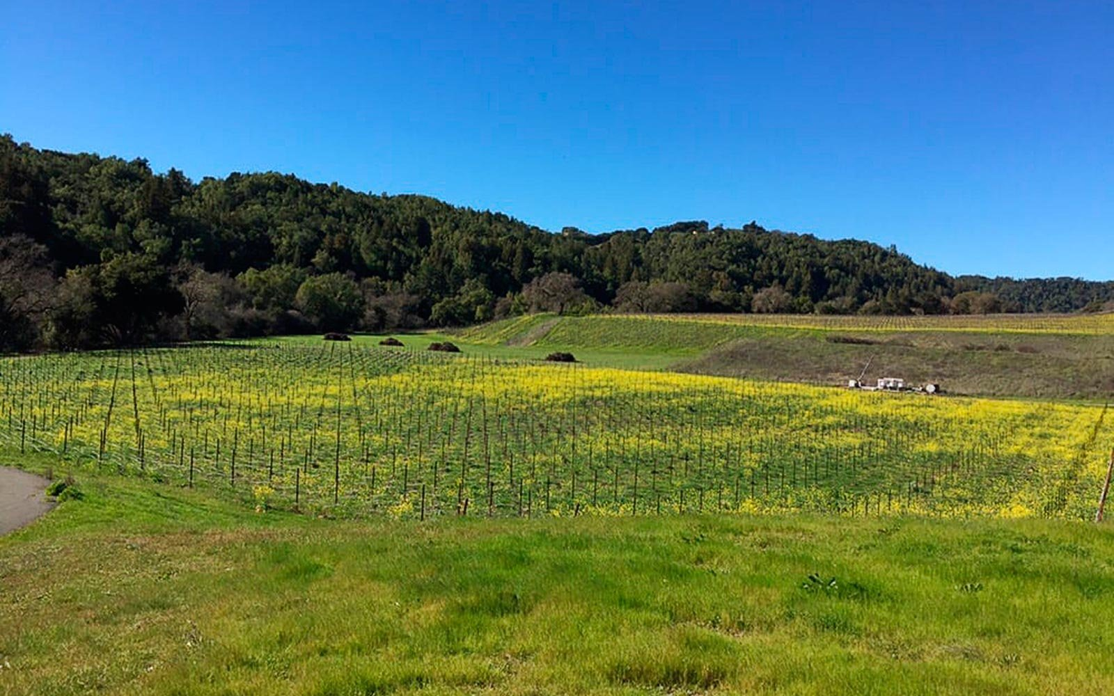 Vineyards to Visit in California