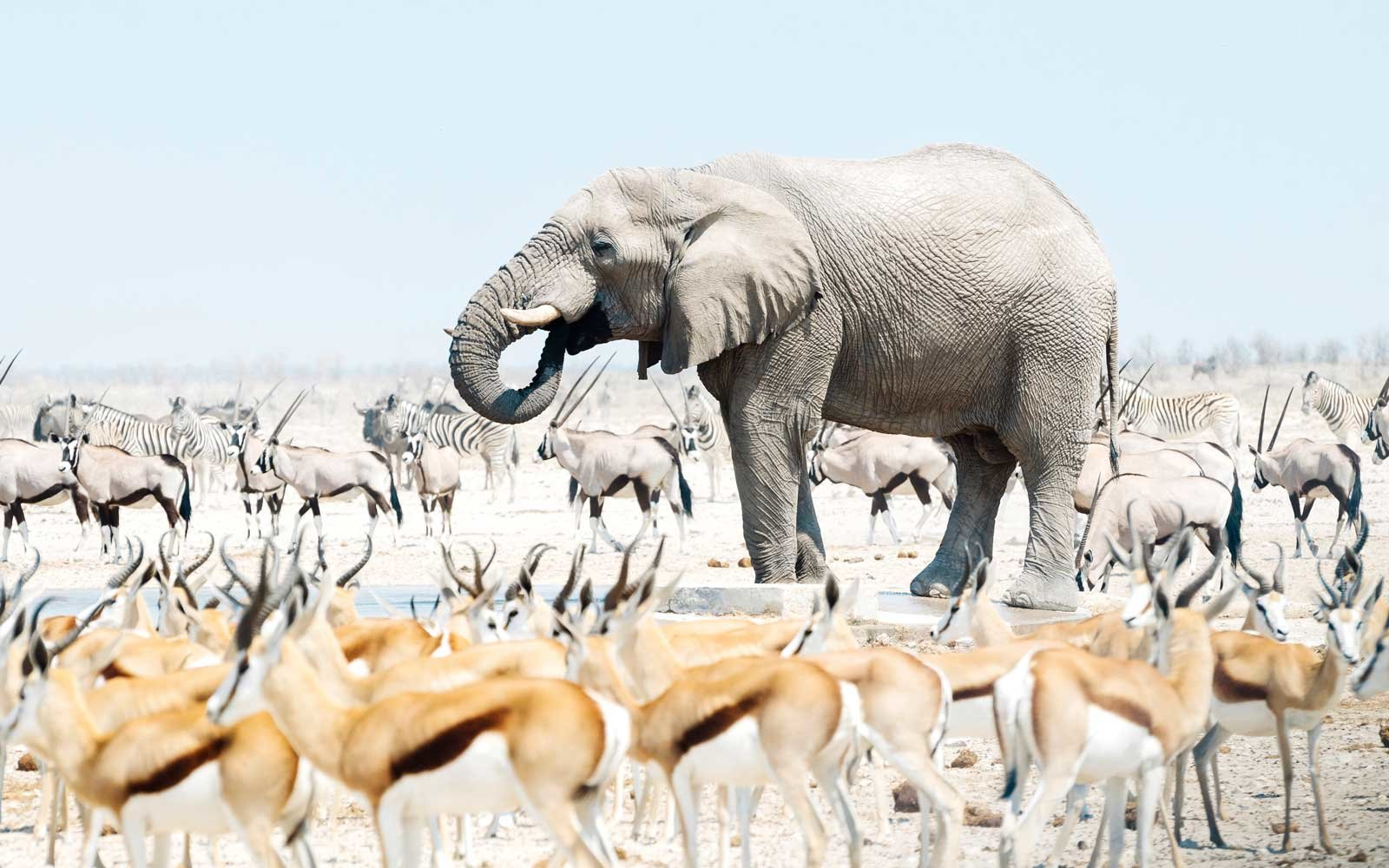 Get up close and personal with elephants and lions in Namibia