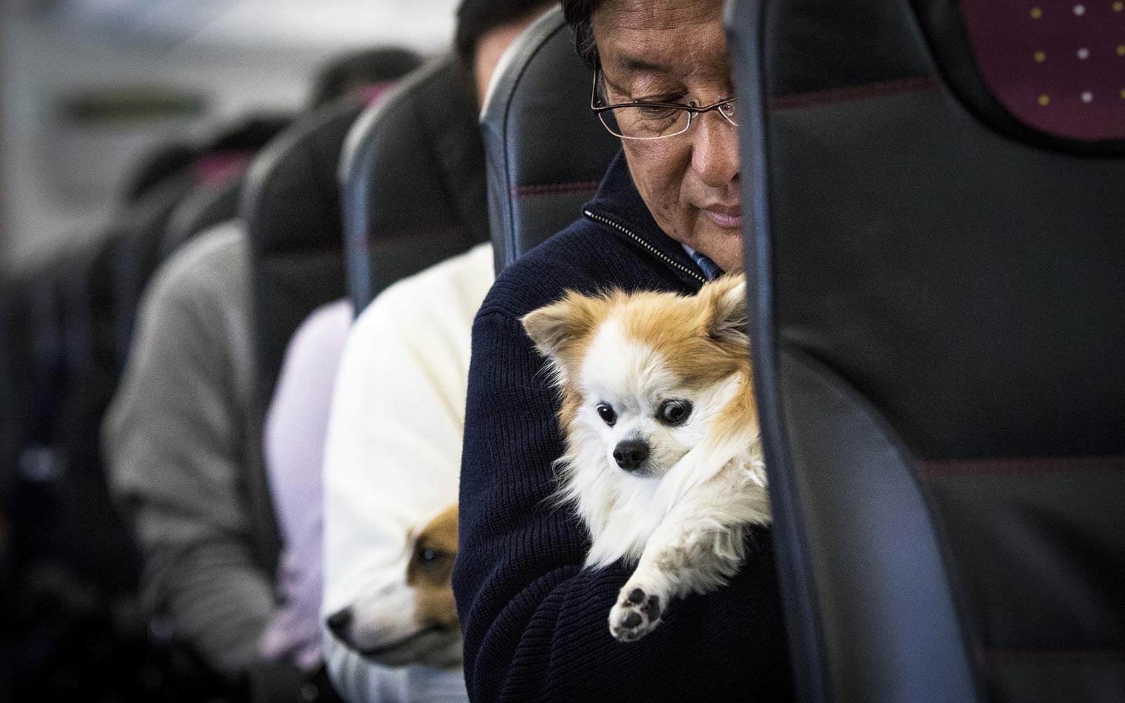 Cute dog airplane passenger