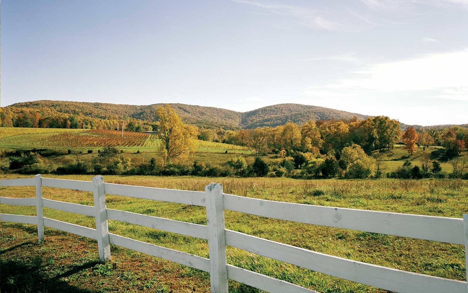 Wine Vacations in Virginia