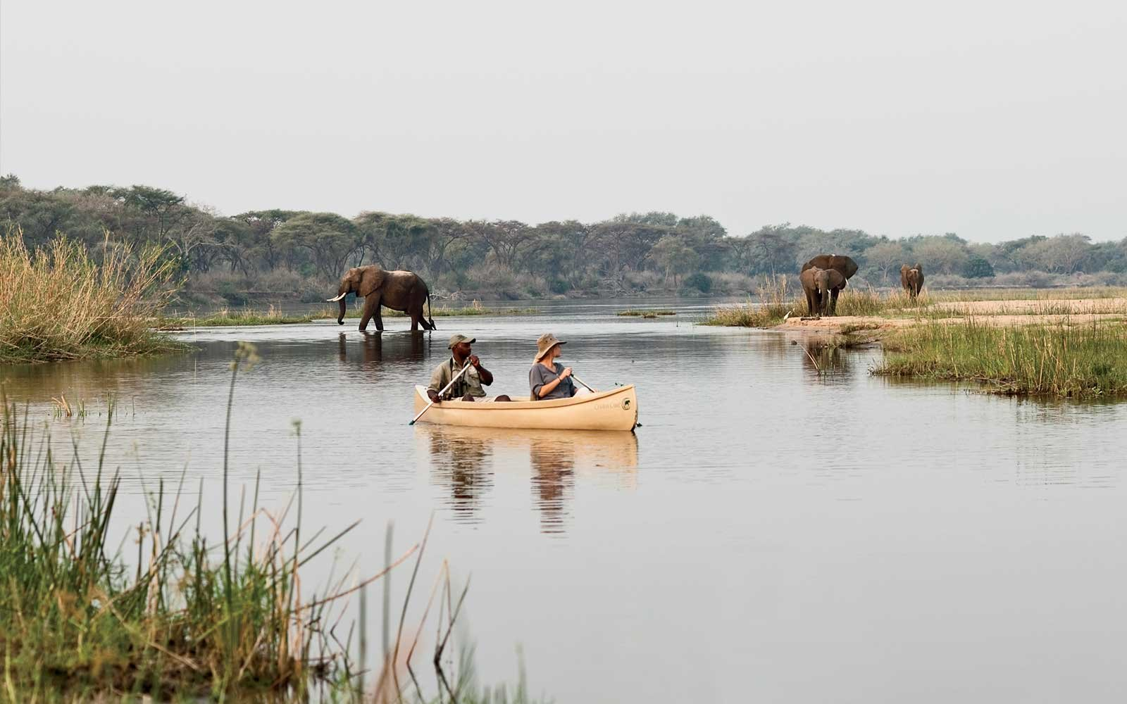 Safari in Zambia