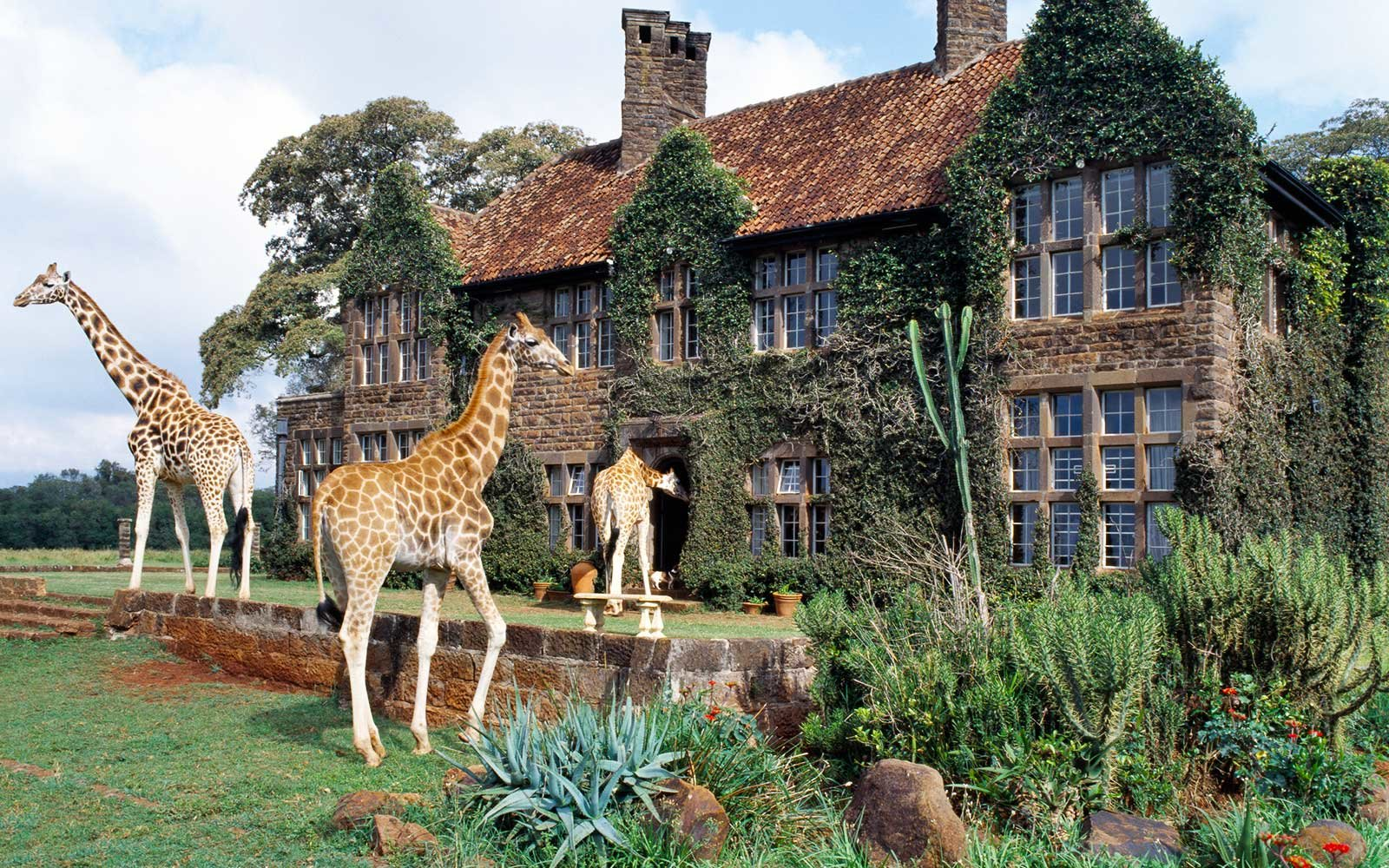 Rothschild giraffes at The Giraffe Manor on the outskirts of Nairobi
