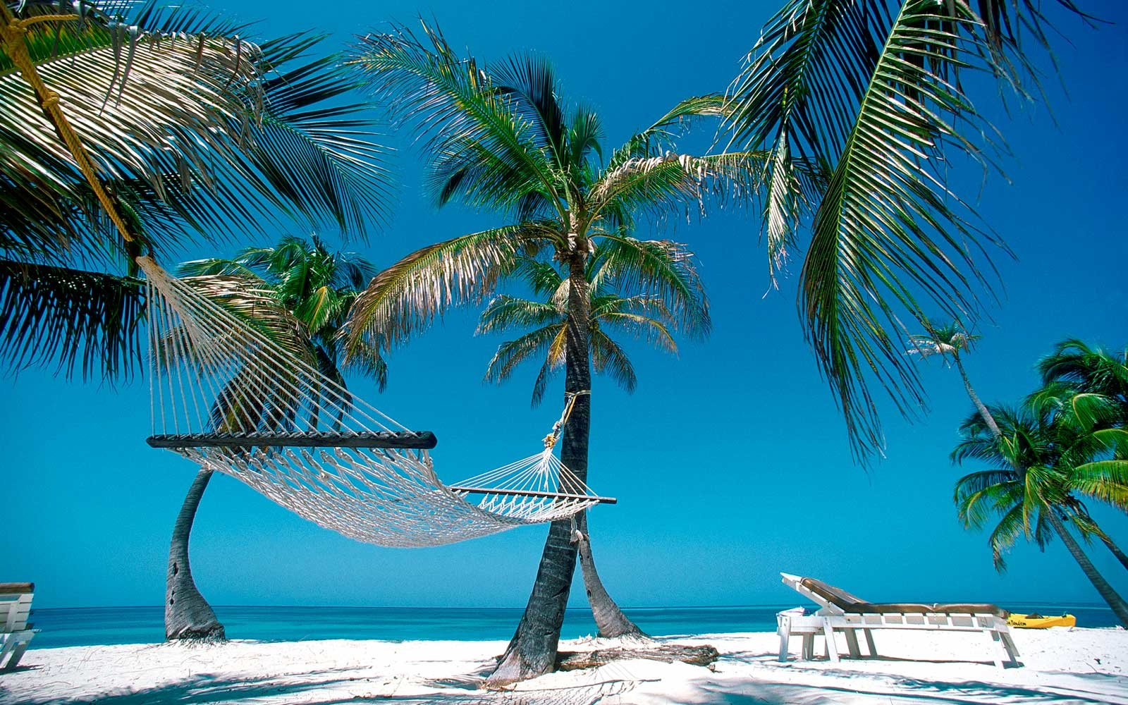 Hammock and Palm Trees, Belize Barrier Reef, Belize