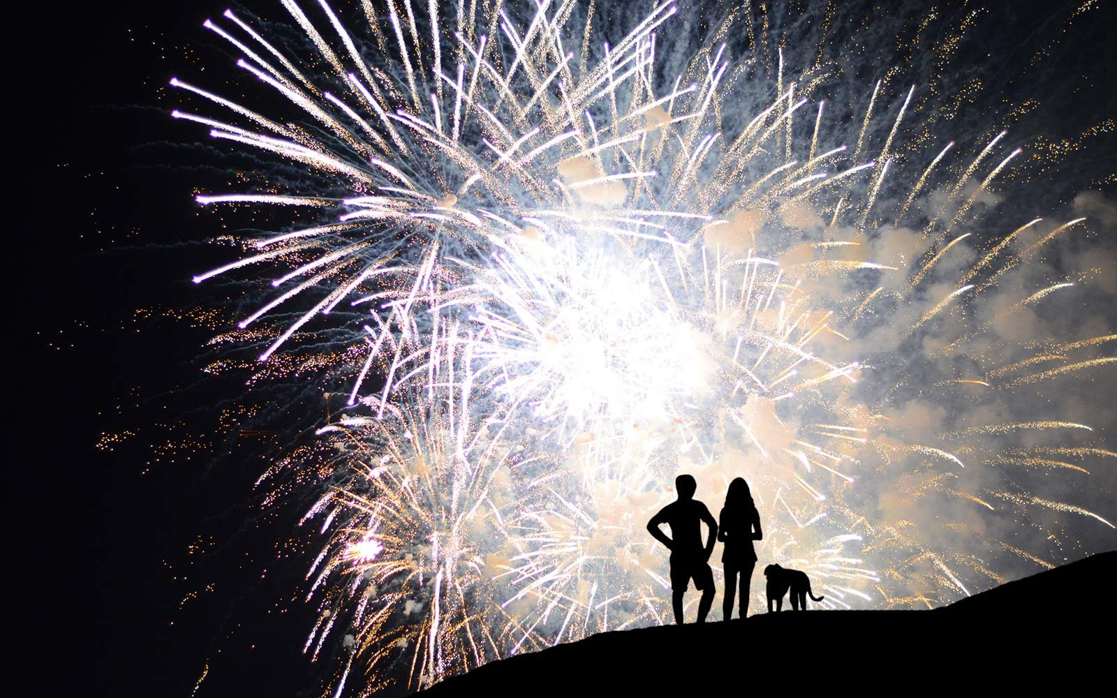 What to do if your dog is afraid of fireworks