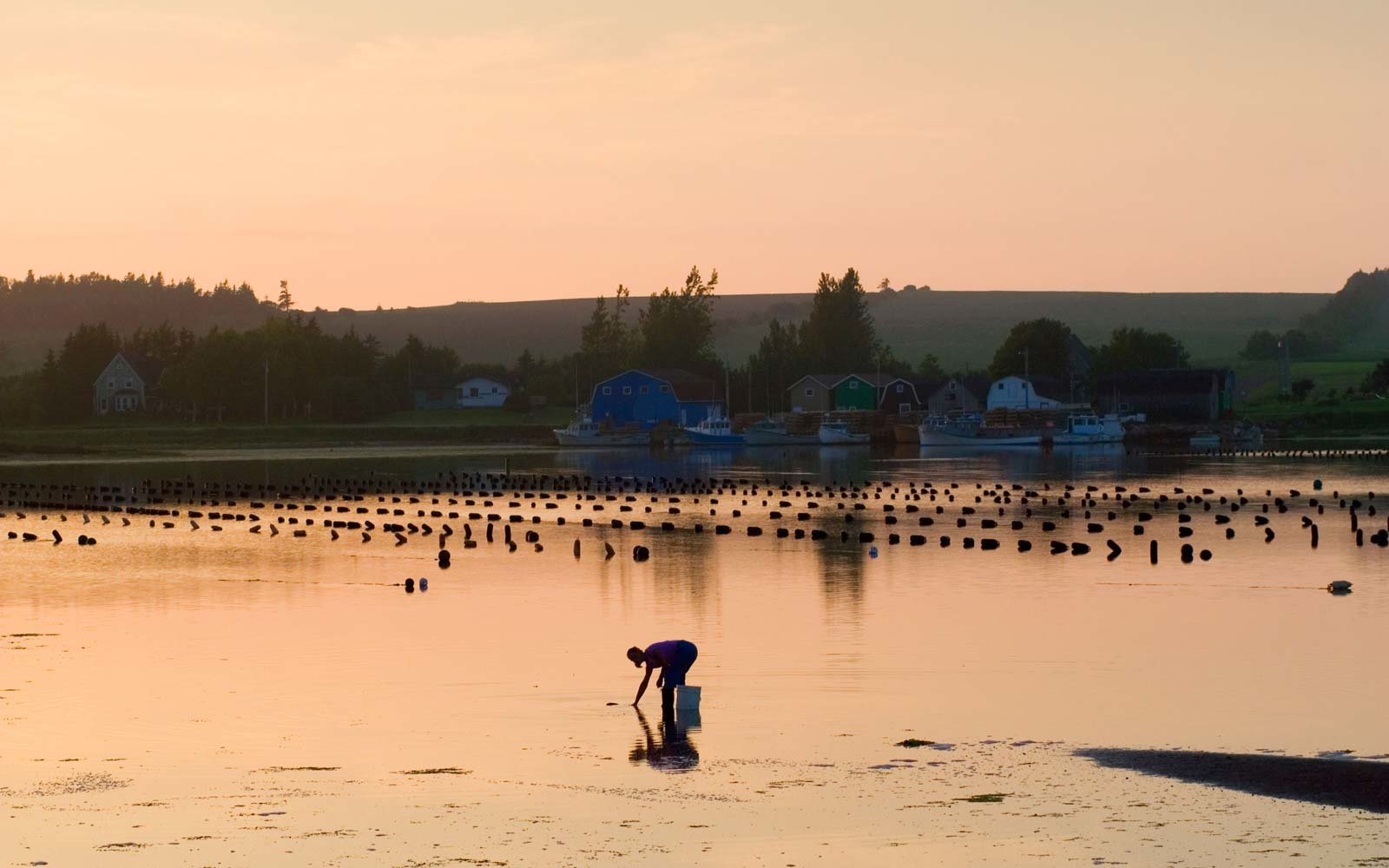 Dig up clams in Prince Edward Island