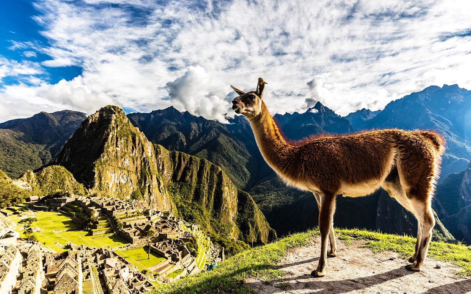 Machu Picchu Cuzco Peru Alpaca Llama UNESCO world heritage site travel