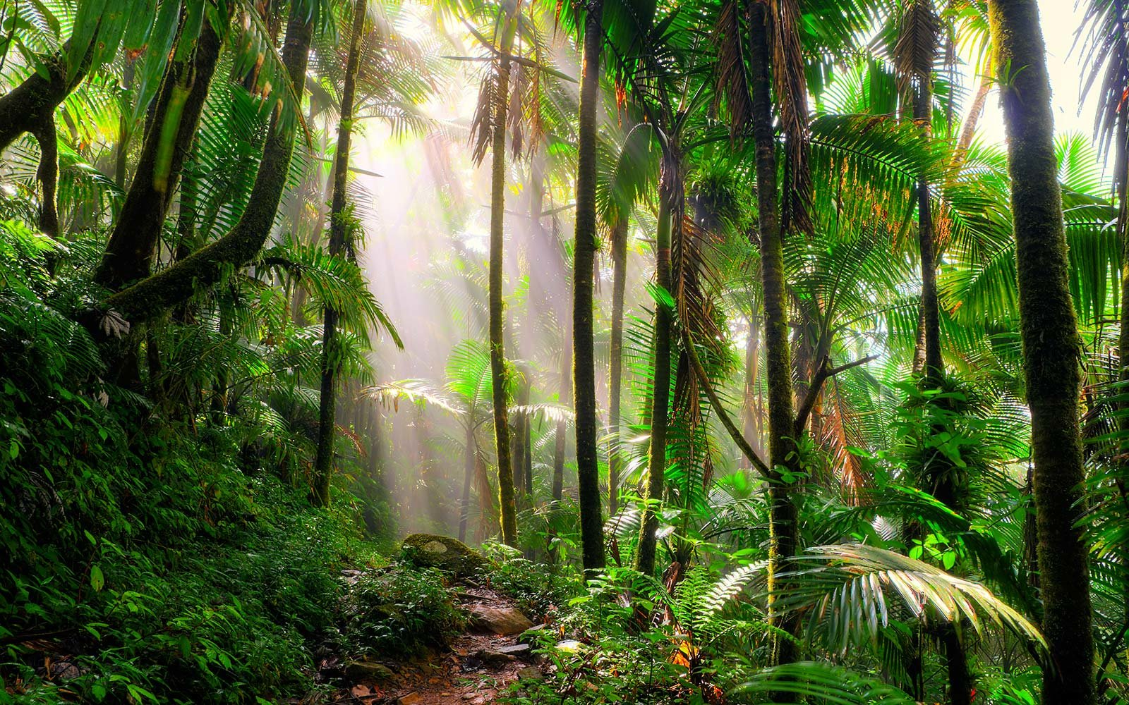Incredible Tropical Rainforest Plants To See On Your Next