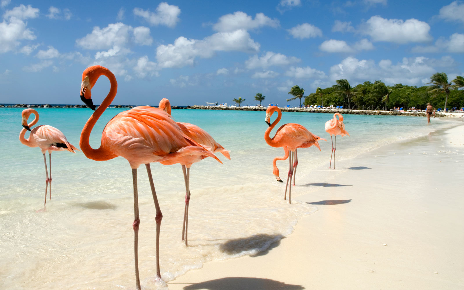 What It S Like To Swim With Flamingos In Aruba Travel Leisure