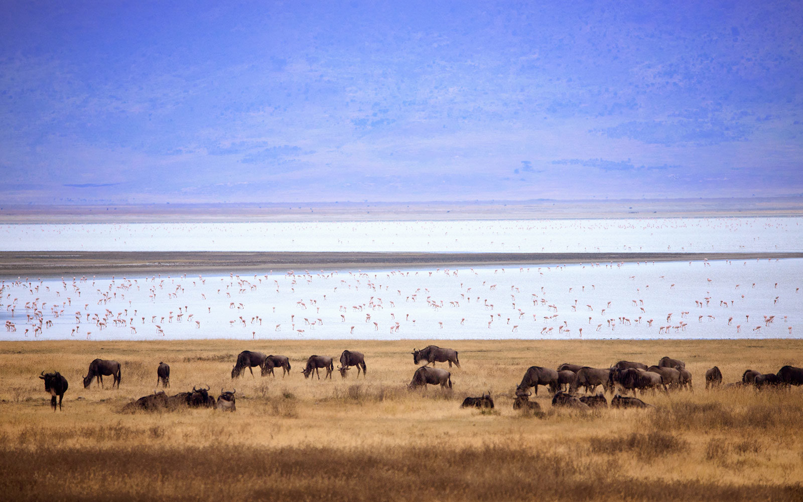 10 Safaris That Offer Unforgettable Experiences for Every Budget