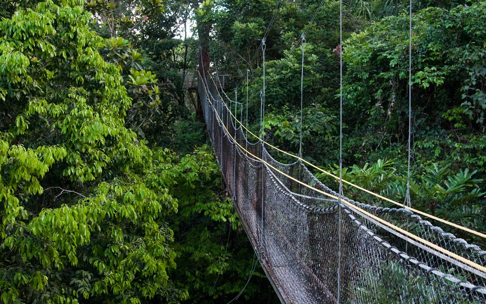 Canopy Walkway, Guyana, South America