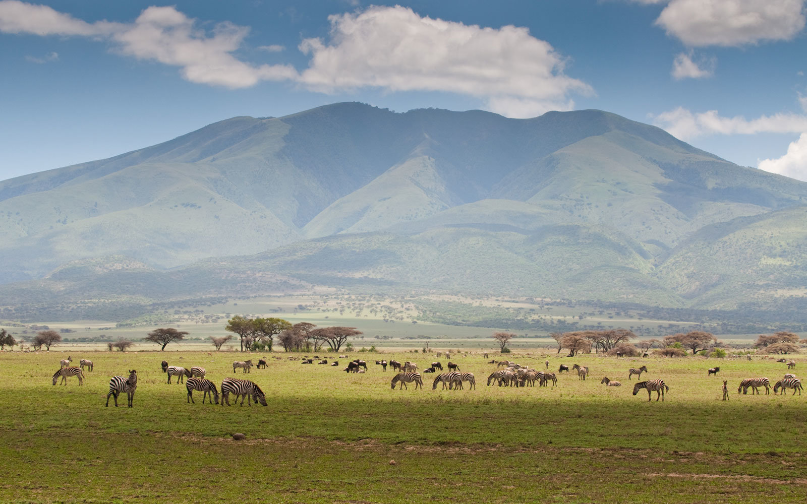 Zebras and Wildebeests, Serengeti National Park, Tanzania