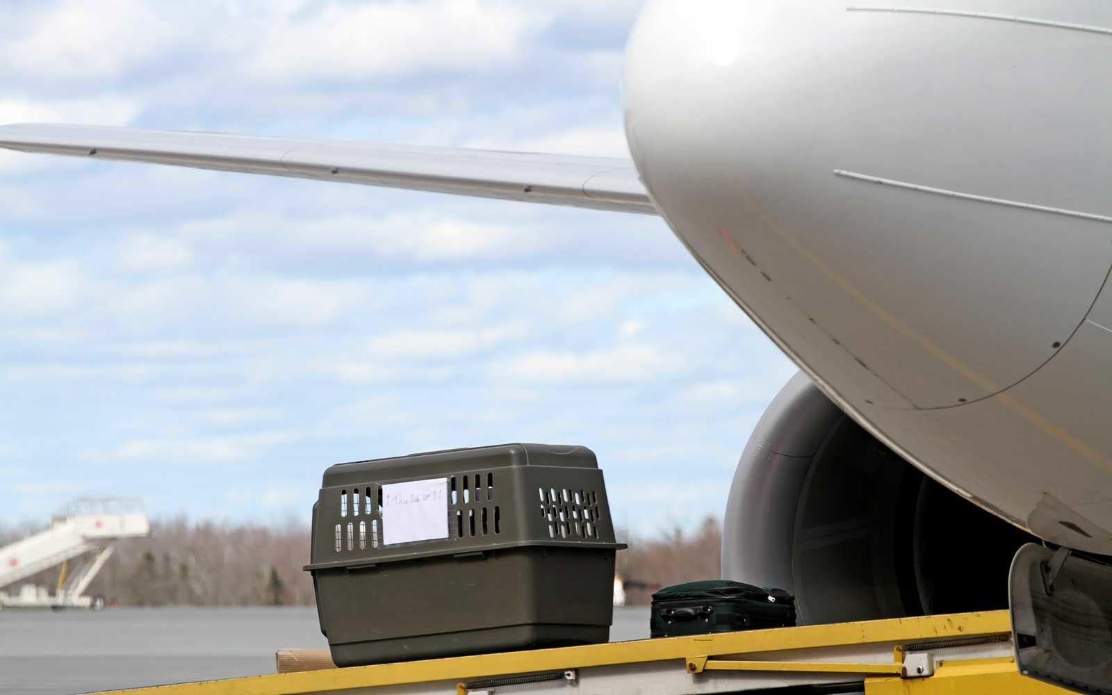 A passengers pet travelling in its carrier is loaded into an airliners cargo compartment.