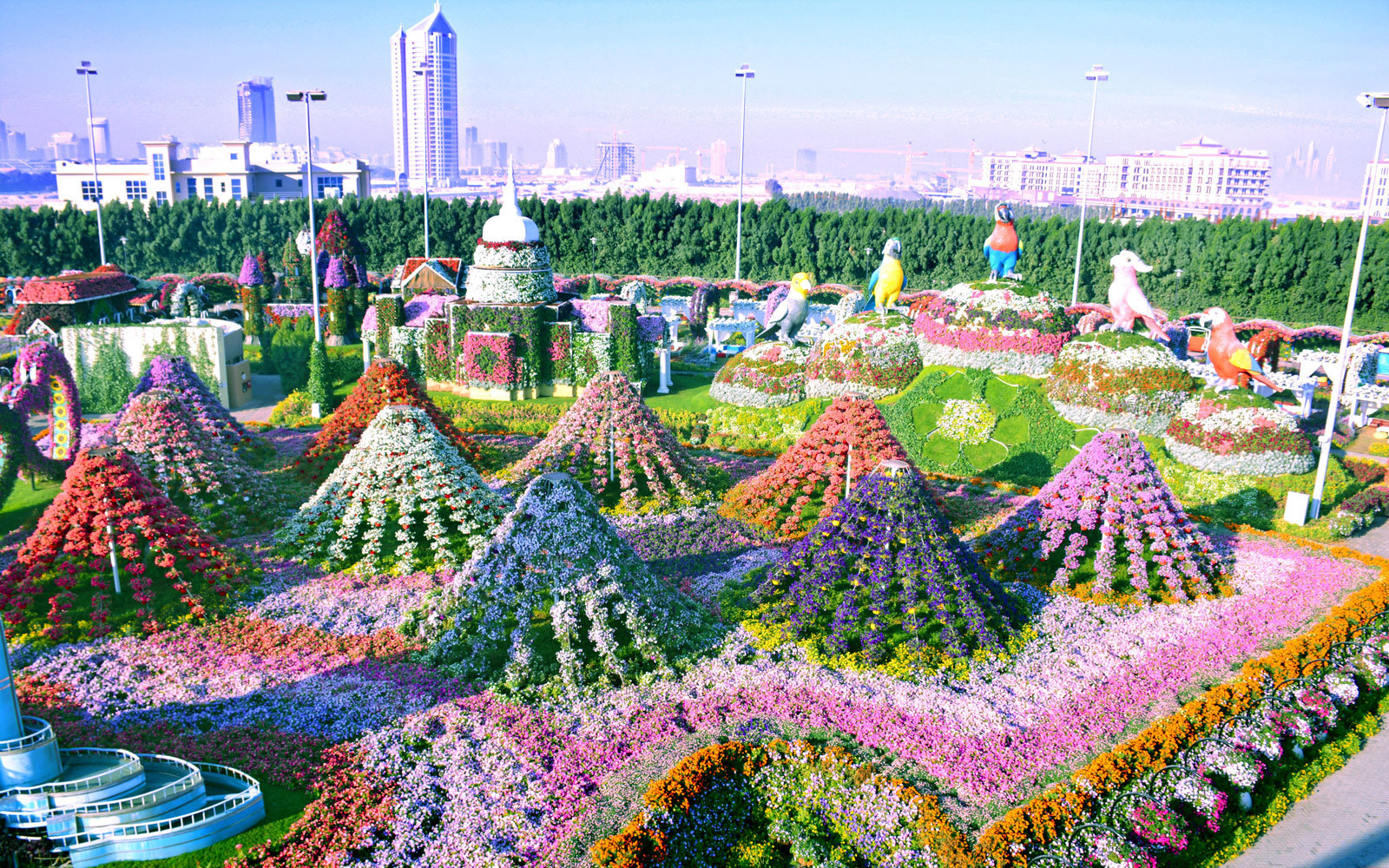 The World's Biggest Flower Garden Sits in the Middle of a ... - photo#4