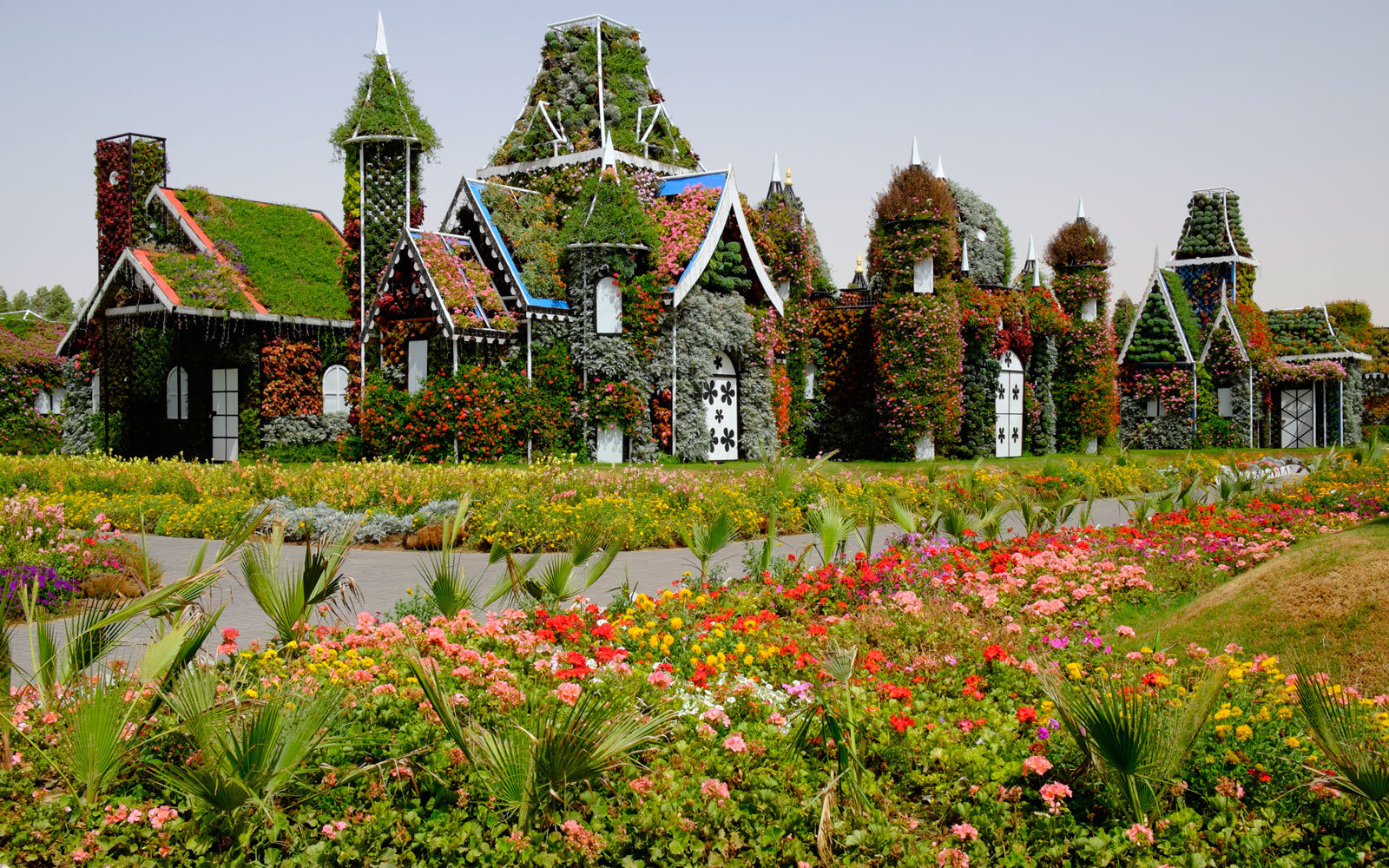 dubai miracle garden row of houses