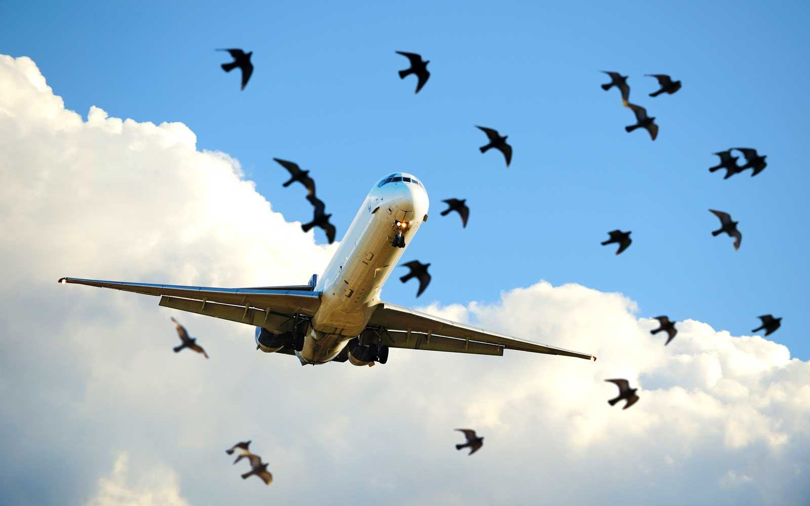 Plane Flying with Birds