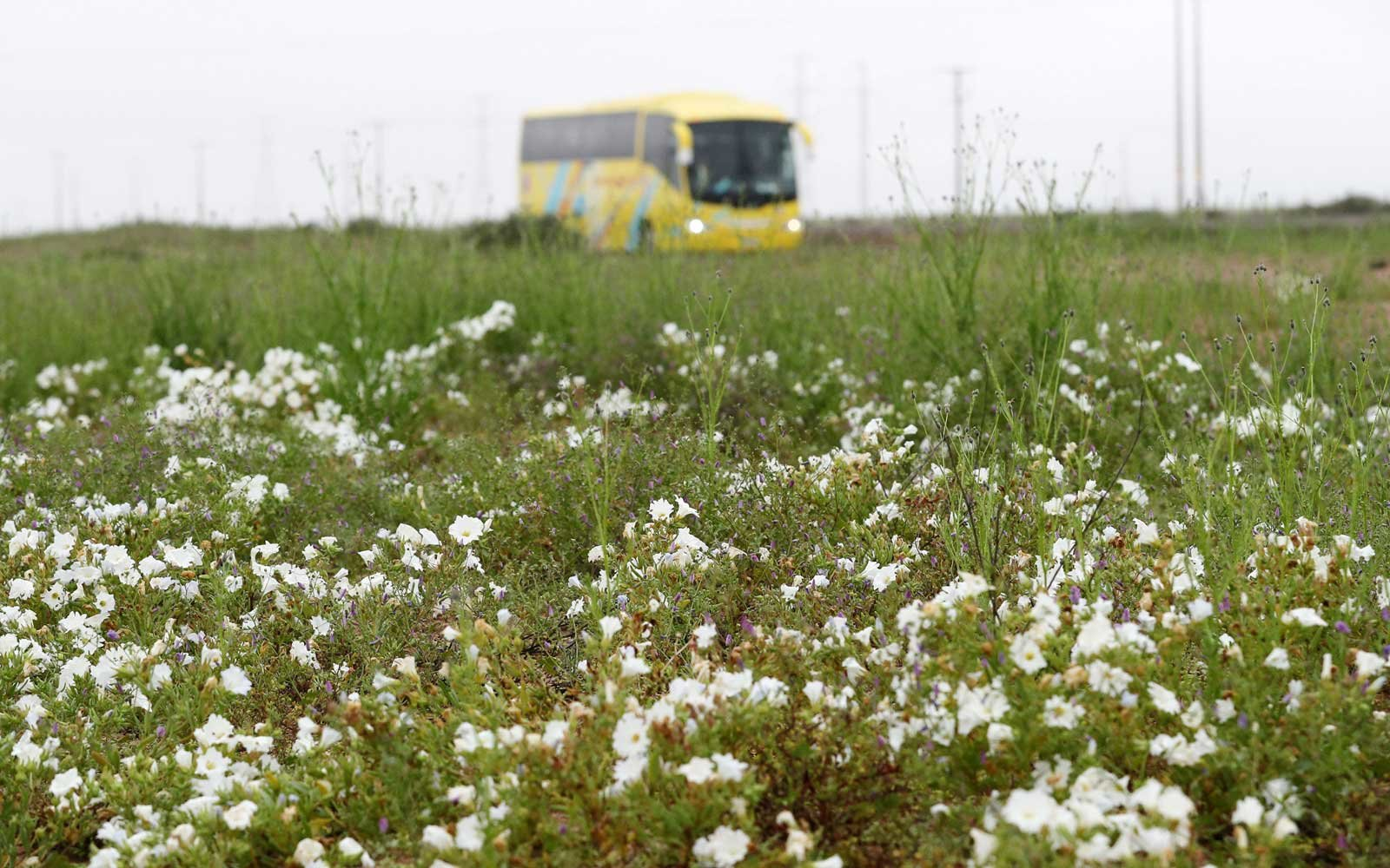 Flowers and Bus in Chile